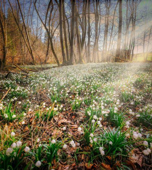 Forest Floor Flower Carpet  - fietzfotos / Pixabay