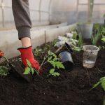 Greenhouse Planting Spring Beds  - Katya_Ershova / Pixabay