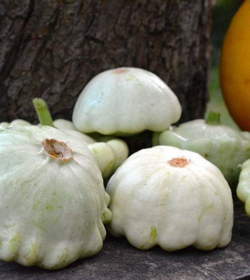 Patison Pumpkin Pumpkins Collect  - utroja0 / Pixabay