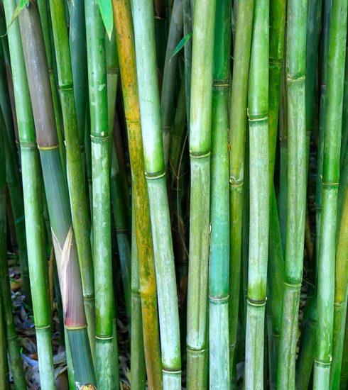 Bamboo Rods Bamboo Rods Bamboo Cane  - matthiasboeckel / Pixabay